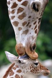 Adorable Pictures Of Mothers With Their Babies