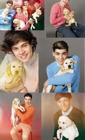 CUTEST DOG WITH 1D | … some time out of their busy schedule to take the cutest…