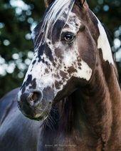 Rare & Beautiful Horse Markings | Cowgirl Magazine