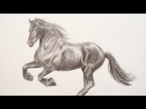 Learning to Draw: How to Draw a Horse – Fine Art-Tips.